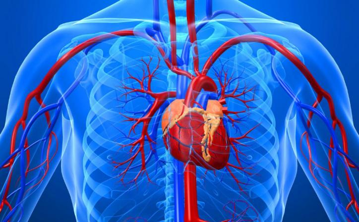 Аневризма аорты: какое лечение применяют специалисты в Израиле, Статьи, Кардиология (кардиохирургия)