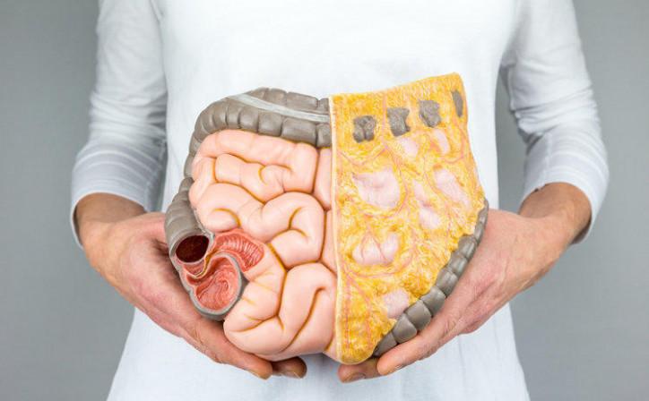 Каннабиноиды - новое лекарство против рака кишечника?, Главная, Статьи
